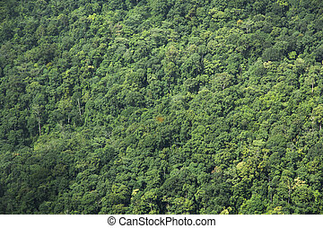 high angle view of tree in forest