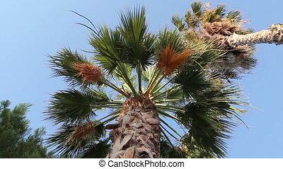 High coconut palm tree on blue sky