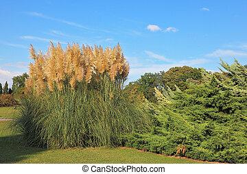 High decorative reeds