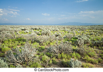 High Desert Sage Brush North Central New Mexico Wide Angle -...