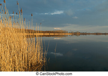 High dry reeds growing in a calm lake, evening clouds on the sky