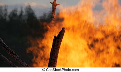 High fire from the branches of trees. Fire in the forest - A...