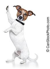 high five dog - dog with paw high five