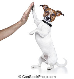 high five dog - dog with paw high five