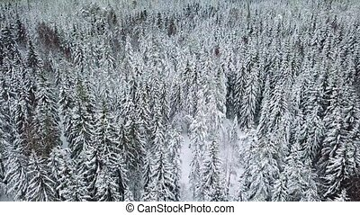 High flying camera tilt up over large woods in the cold...