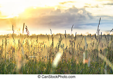 High Grass Glowing in Sunbeams on a Summer Morning with Cloudy Sky and Trees down The Hill. Inspiring, Positive Attitude, New Day Concept.