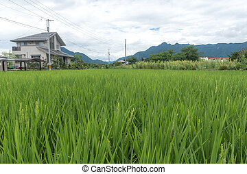 High grass. Green lawn on the background of the house