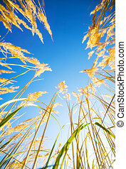 High grass on blue sky background