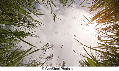 High Grass Towers over Camera as it Looks Skyward, with Sound
