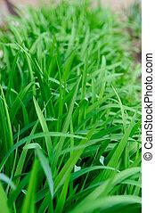 High green grass