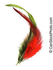 High Key feathers - High-key feathers against a white...
