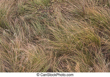 high mountain meadow grass