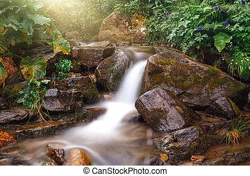 High mountain rainforest stream. River in mountain