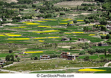 High mountains are a Tibetan village: terraced farming, green and yellow fields of rice and barley, small poor houses peasants in the middle of vegetation, India.