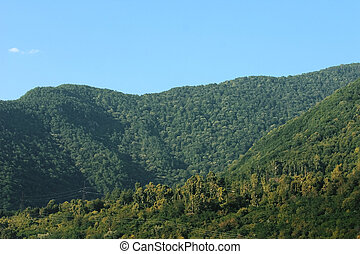 high mountains, covered a forest array on a background blue sky