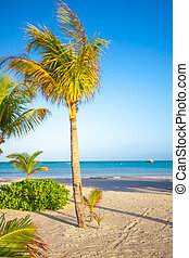 High palm tree on white sand beach in exotic resort