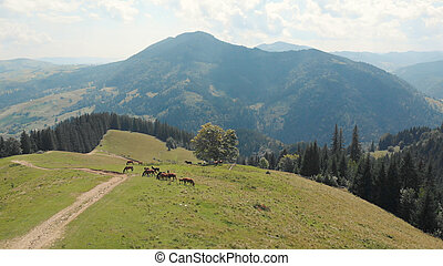 High place in the mountain with horses.
