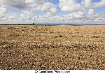 high stubble field