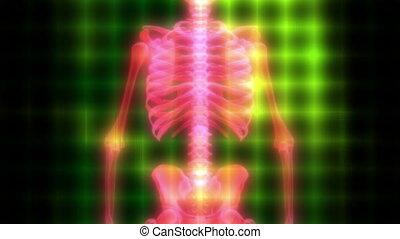 High Tech Skeleton Scan Looping Animation