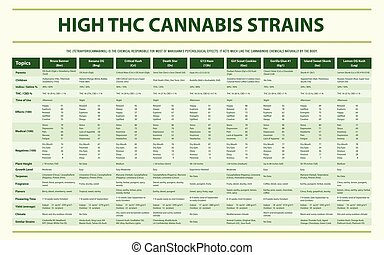 High THC Cannabis Strains horizontal infographic Complete - ...
