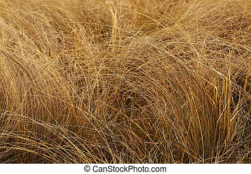 High thin withered grass. Autumn. Background.