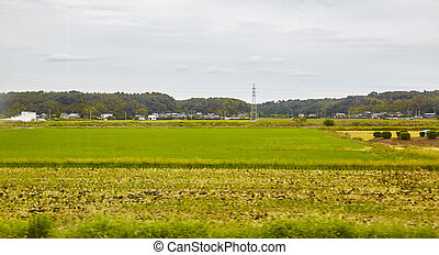 High voltage electrode with rice field