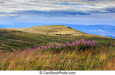 high wild plants at the mountain top - high wild grass and...