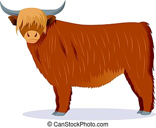 Highland cattle cow vector illustration