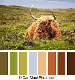 Highland cow palette