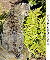 Highland Lynx Cat in Ferns