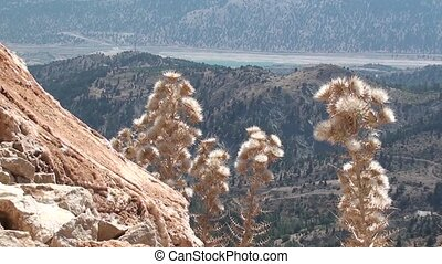 Highland panorama in Turkey 2 - Dry plant and a rock against...