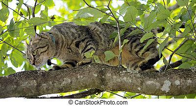 Highlander Lynx Cat Hunting
