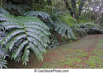 Highlands jungle path in Rarotonga Cook Islands