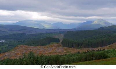 Highlands, Scottish Forest - Graded Version - Graded and...
