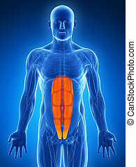 Highlighted - abs - 3d rendered illustration - abs