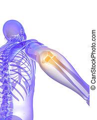 highlighted ellbow - 3d rendered medical illustration of a...