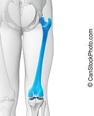 Highlighted - femur bone - 3d rendered illustration - femur...