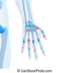 Highlighted finger joints - 3d rendered illustration of...