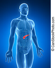 Highlighted human pancreas - 3d rendered illustration of the...