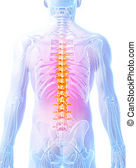 Highlighted human spine - 3d rendered illustration - human...