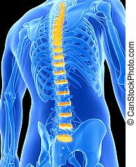 Highlighted intervertebral disks - 3d rendered illustration...
