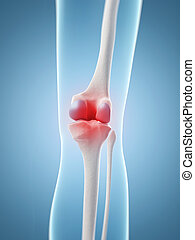 Highlighted knee joint