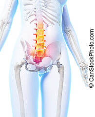 Highlighted lower spine - 3d rendered illustration of a...