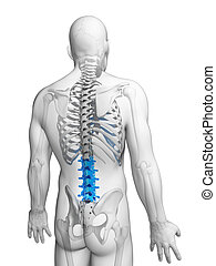 Highlighted - lumbar spine - 3d rendered illustration -...