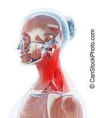 Highlighted neck - 3d rendered illustration of a painful...