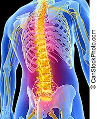 highlighted, rygrad