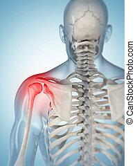 Highlighted shoulder - 3d rendered illustration of a painful...