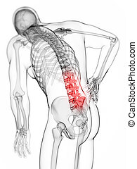 Highlighted spine - 3d rendered illustration - backache male