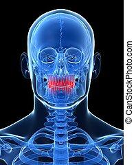 Highlighted - teeth