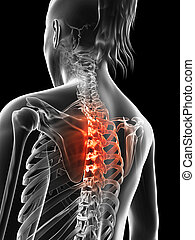 Highlighted thoracic spine - 3d rendered illustration of the...